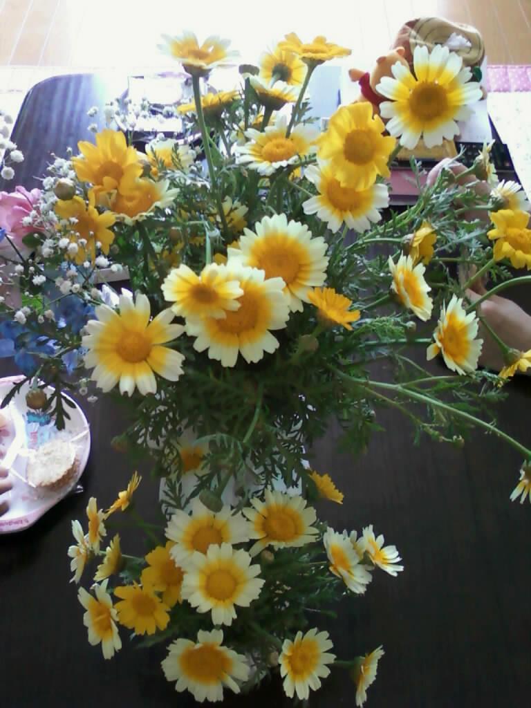 かわいい黄色の花春菊