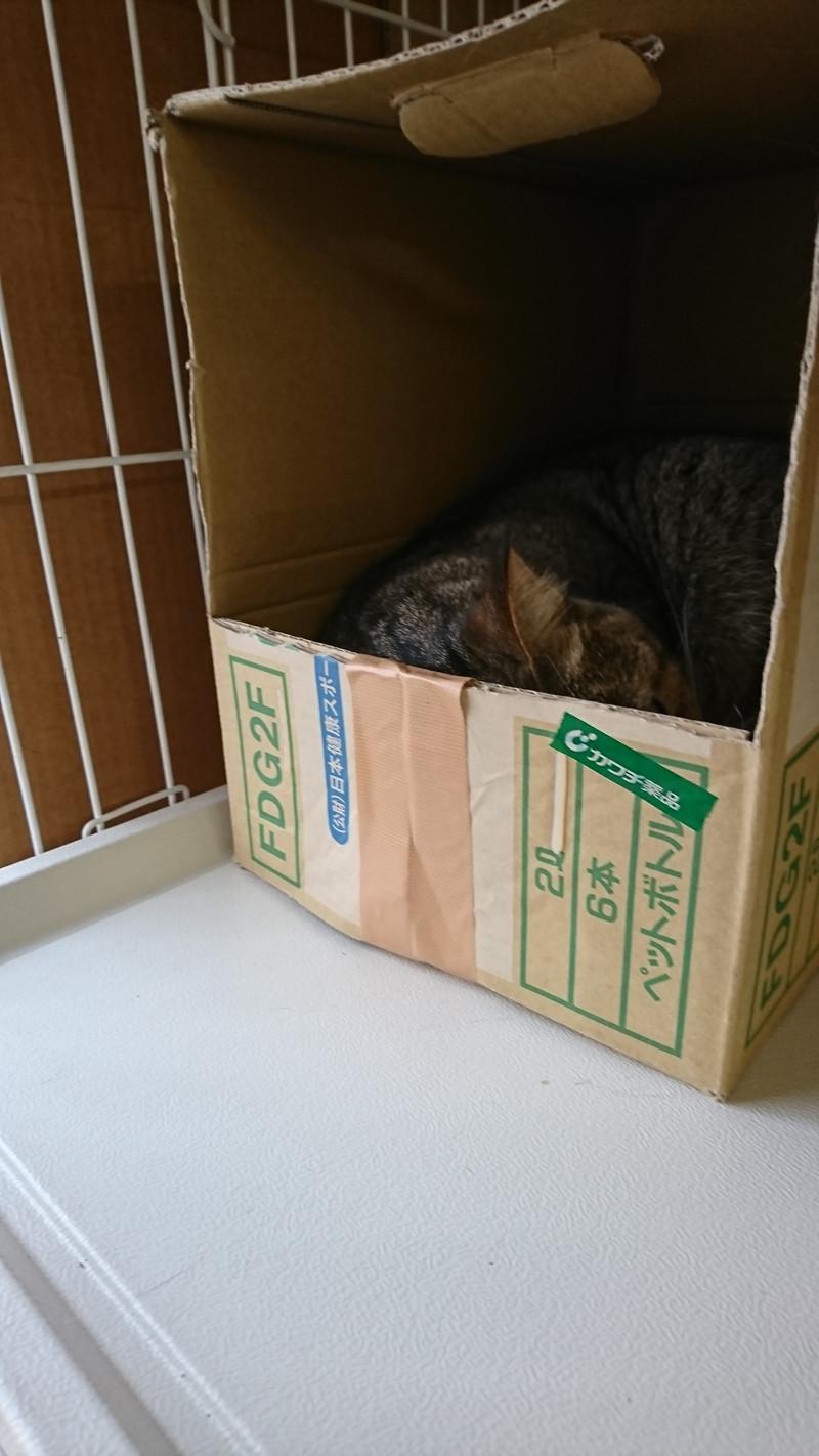 猫のさくらちゃん&ふくちゃん お泊まりの様子