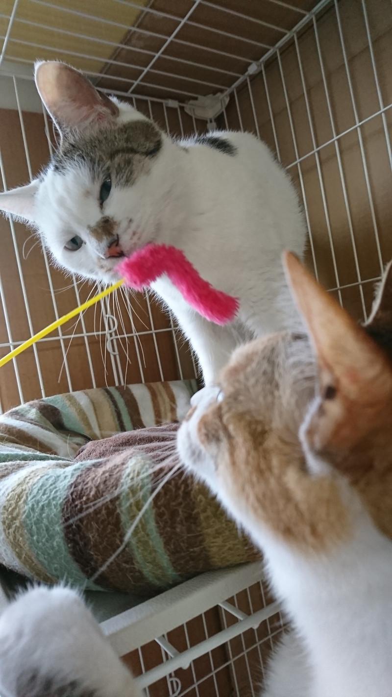 猫のリンちゃん&チャコちゃん お泊まりの様子