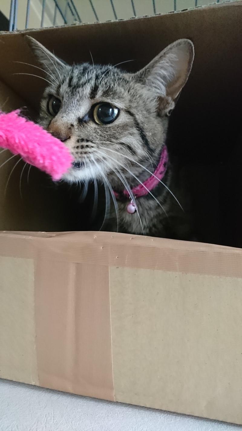 猫のココちゃん お泊まりの様子