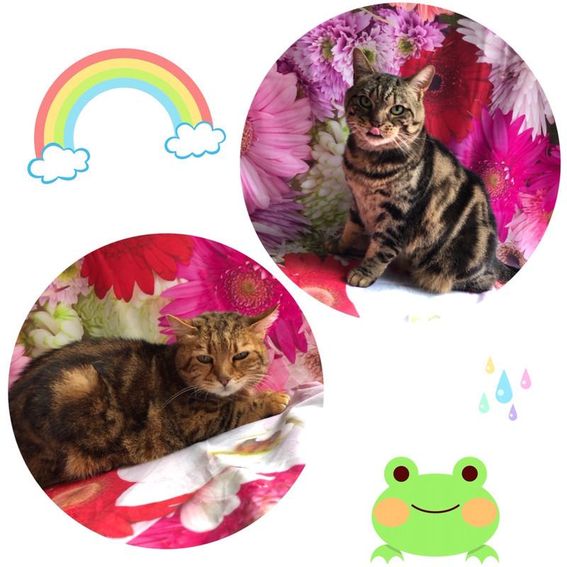猫 リンちゃんココちゃん シャンプーコース