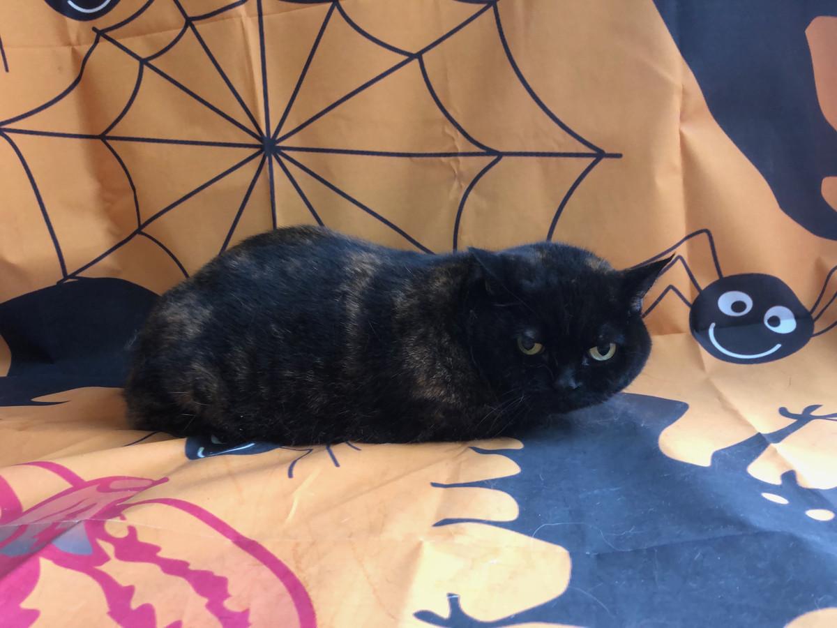 猫 うにちゃん シャンプーコース