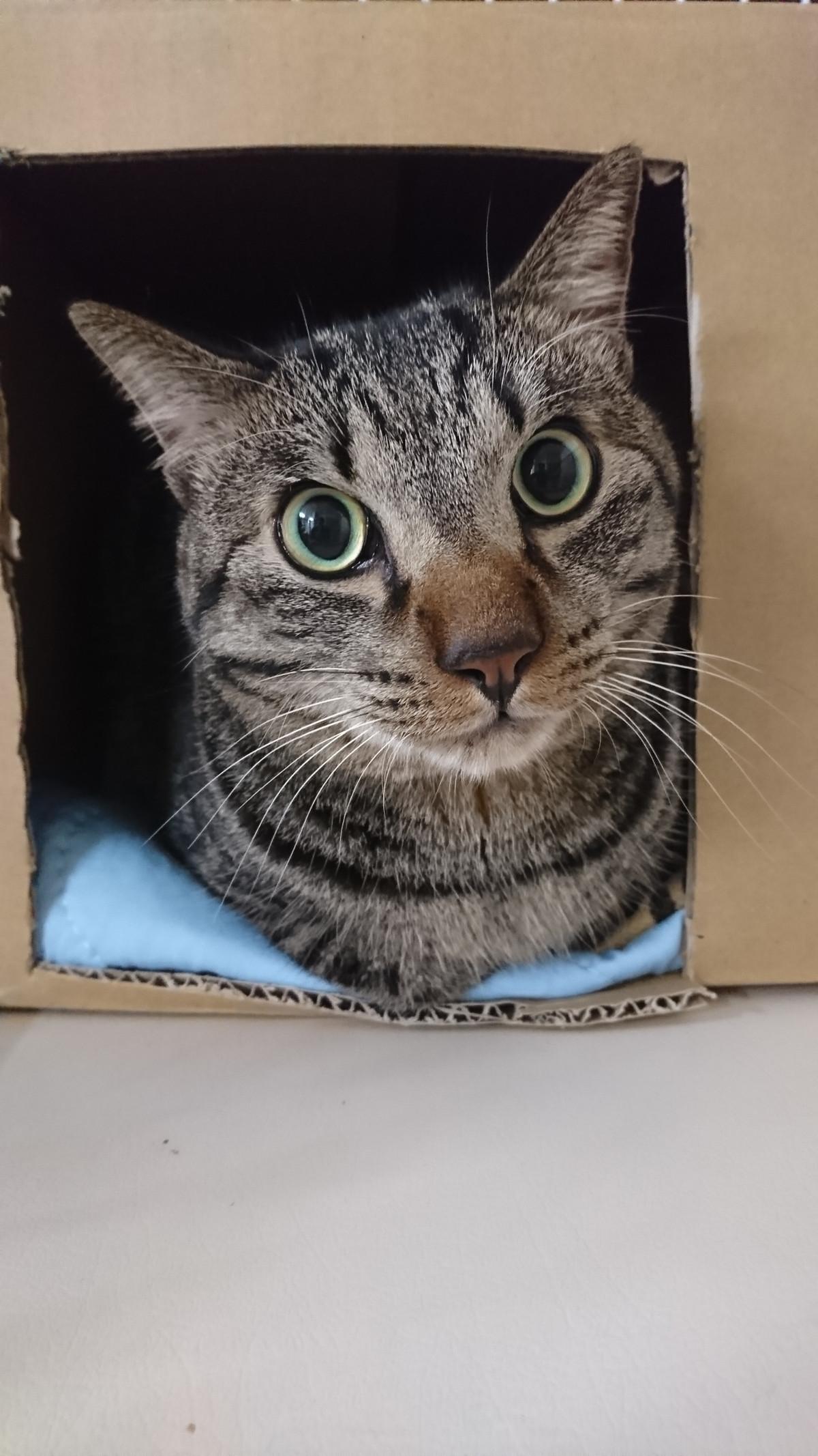 猫の虎太郎ちゃん お泊まりの様子