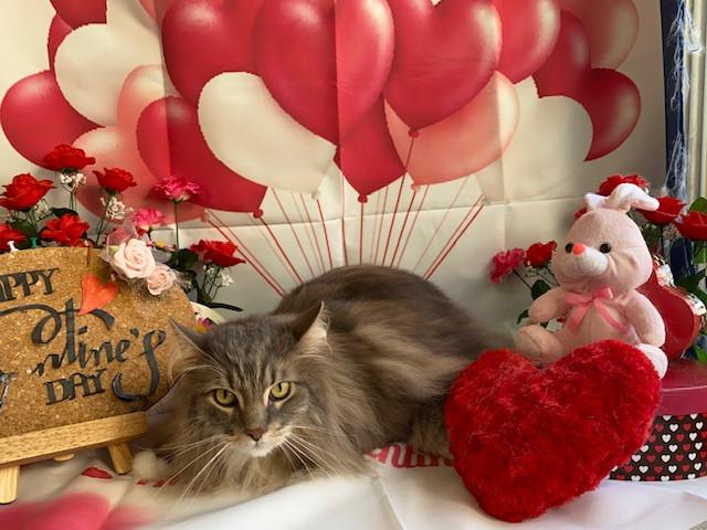 猫 ガブちゃん シャンプーコース