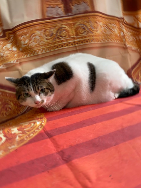 猫 ジヴェルニーちゃん シャンプーコース