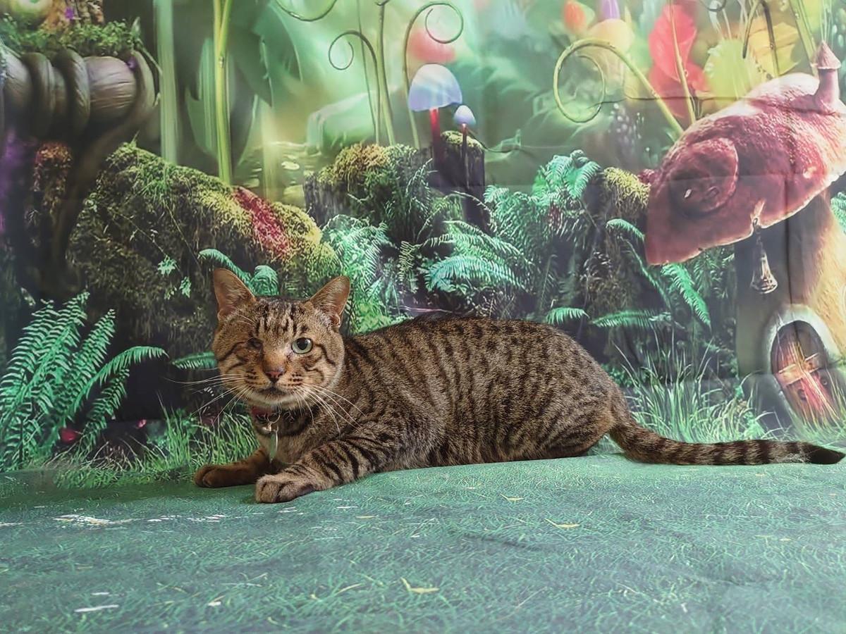 猫の十兵衛ちゃん シャンプーコース